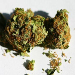 K2 Bud
