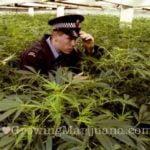 I love growing marijuana beginner mistakes
