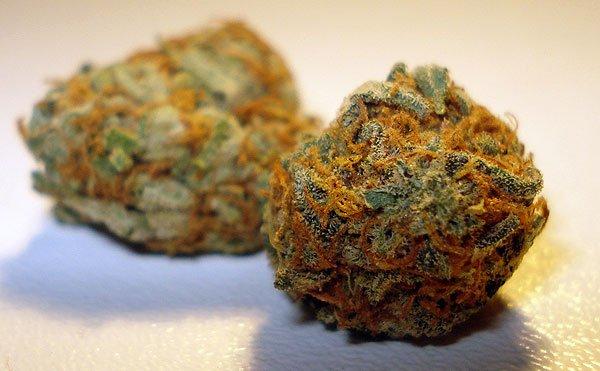 Orange bud indoor cannabis bud