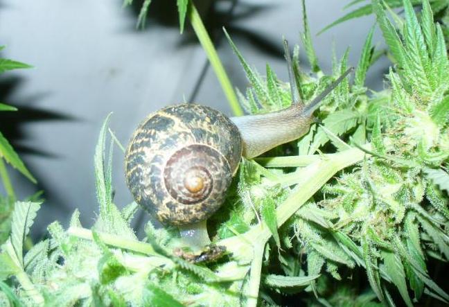 I love marihuana caracoles babosas