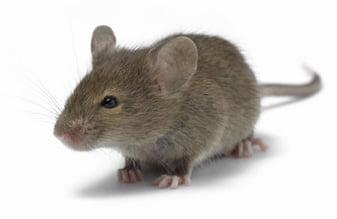 I love marihuana ratones ratas
