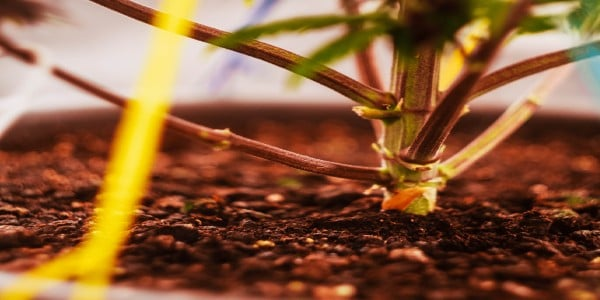 How to Fix Deficiency in Soil