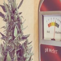 Measuring pH and PPM for Growing Marijuana