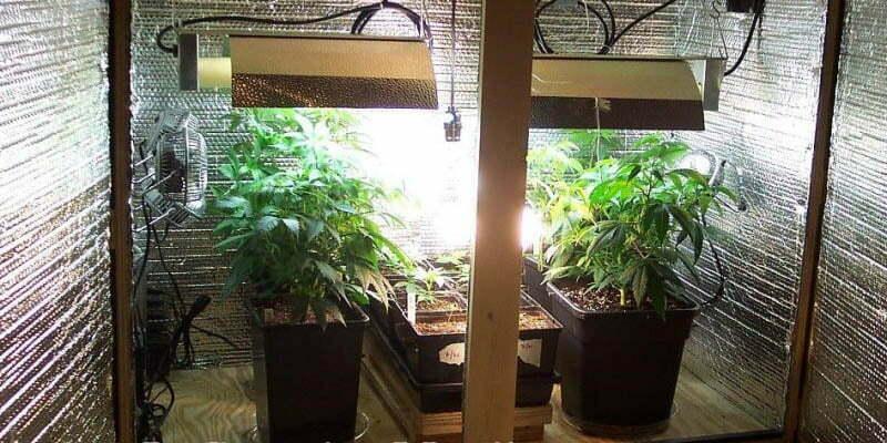 How To Setup A Low Budget Indoor Marijuana Garden