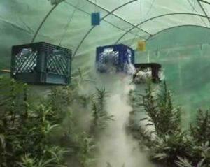 co2 photosynthesis marijuana