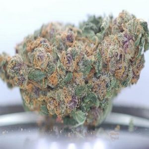 Blueberry bud