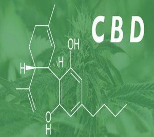 CBD in cannabis