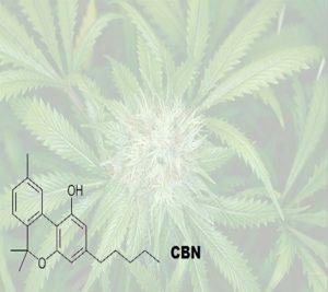 CBN in cannabis