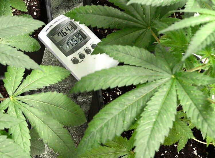 Temperature grow schedule