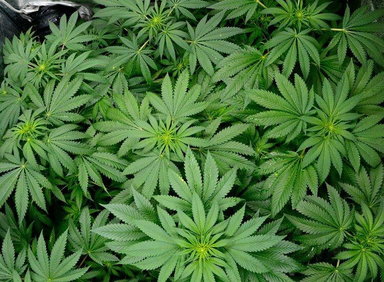 Week 3 flowering grow schedule