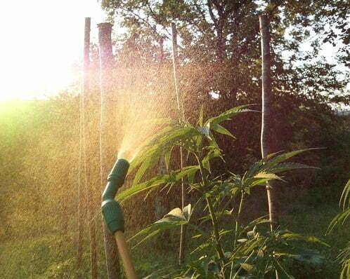 Humidity Levels For Marijuana Plants Complete Schedule