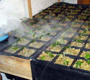 Raise cannabis humidity