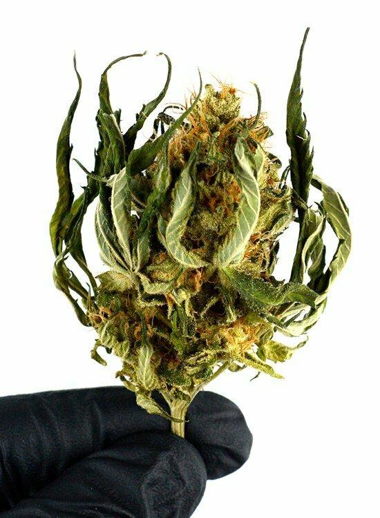 Marijuana bud trimming