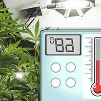 Cannabis temperature