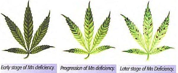 Fix manganese deficiency