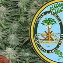 Growing Marijuana In South Carolina