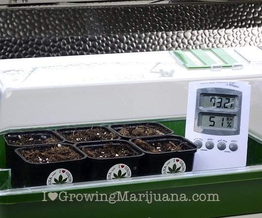 Germinate Cannabis Seeds Methods
