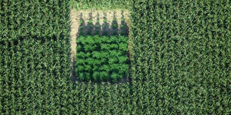 The Best Places To Grow Marijuana Outdoors