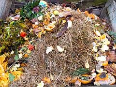 Composting for outdoor cannabis