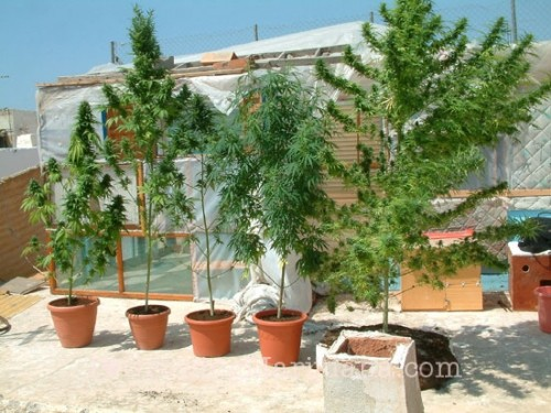 How to grow cannabis on a public rooftop?