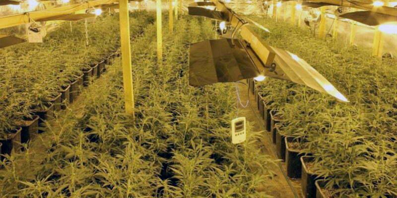 Build An Indoor Marijuana Grow Room