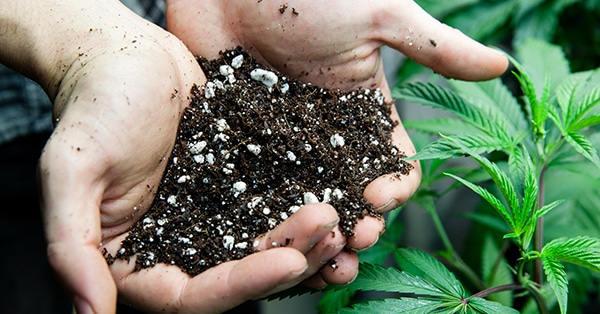 Weed plant soil problems