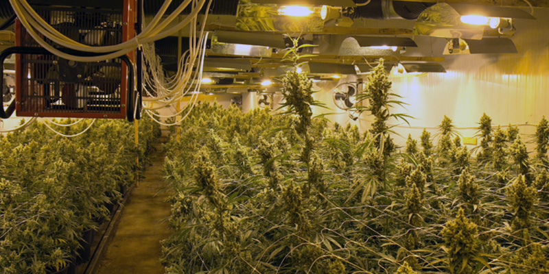Create The Best Climate For Marijuana Grow Room