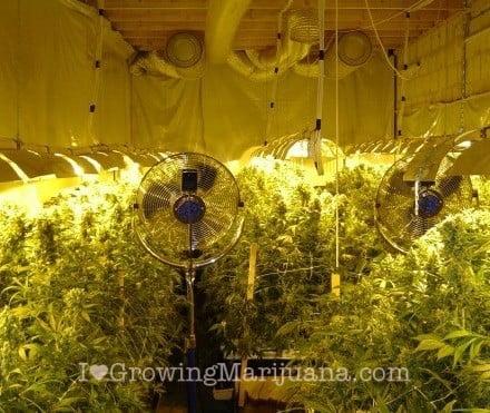 How To Build An Indoor Marijuana Grow Room Custom Basement Grow Room Design