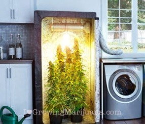 Cannabis grow tent & How To Build An Indoor Marijuana Grow Room