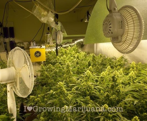 Marijuana grow room ventilation pictures to pin on for Air circulation in a room