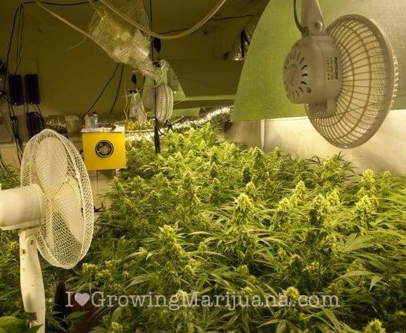 Create the best climate for marijuana grow room for Indoor gardening ventilation