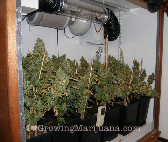 Wall cabinet grow room cannabis : cannabis grow tent - memphite.com