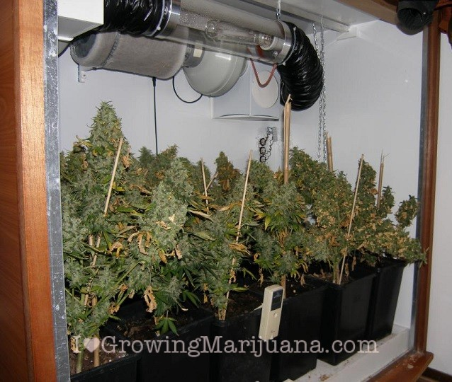 Wall cabinet grow room cannabis & How To Build An Indoor Marijuana Grow Room