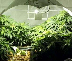 marijuana advantages and disadvantages