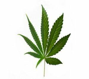 Cannabis hybrid