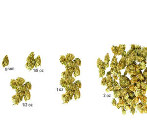 Marijuana pounds and kilograms