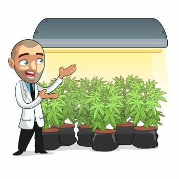 Marijuana Grow Forum