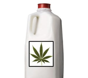 Cannabis milk or cream