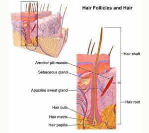 What happens during the marijuana hair drug testing process
