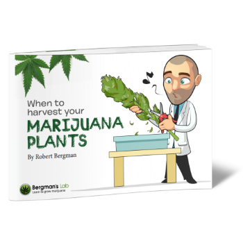 Learn to Grow Marijuana