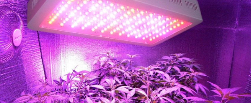 Grow Lights Guide For Growing