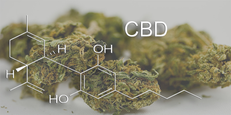 CBD (Cannabidiol) In Medical Marijuana
