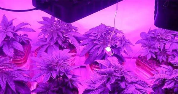 Lighting - LED grow lights