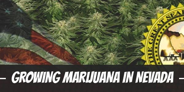 Growing Marijuana In Nevada