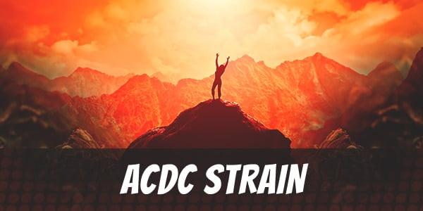 ACDC Strain