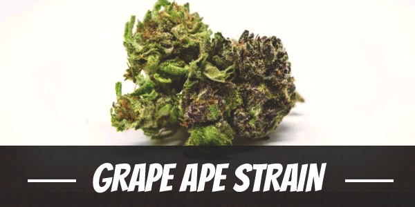 Grape Ape Strain
