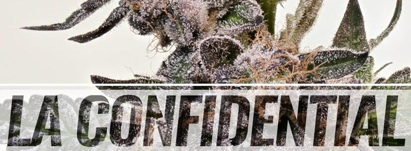 La Confidential Strain Review - I Love Growing Marijuana