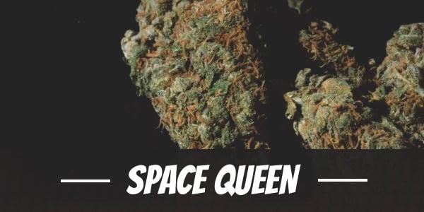 Space Queen Strain