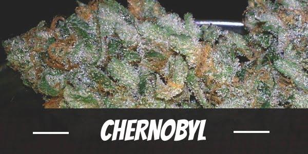 Chernobyl Strain