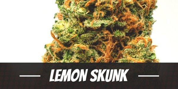 Lemon Skunk Strain